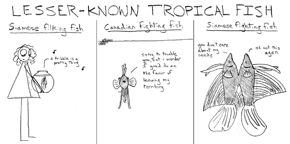 Lesser-Known Tropical Fish